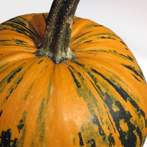 Pumpkin-seed-closeup