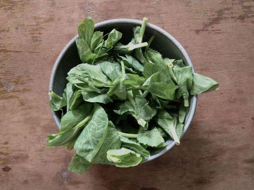 Real pea leaves